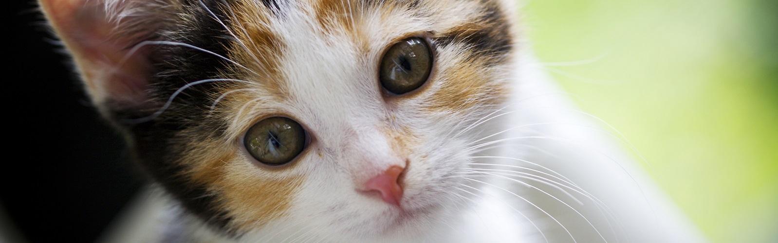dr elseys cat attract cat litter